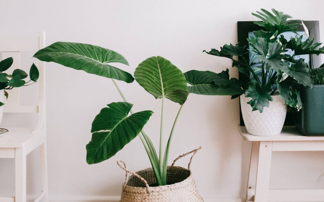 Indoor Plant Styling Tips: How To Arrange Your Plants