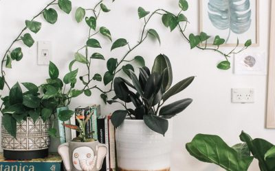 Green Up Your House with These Brisbane Plant Delivery Services